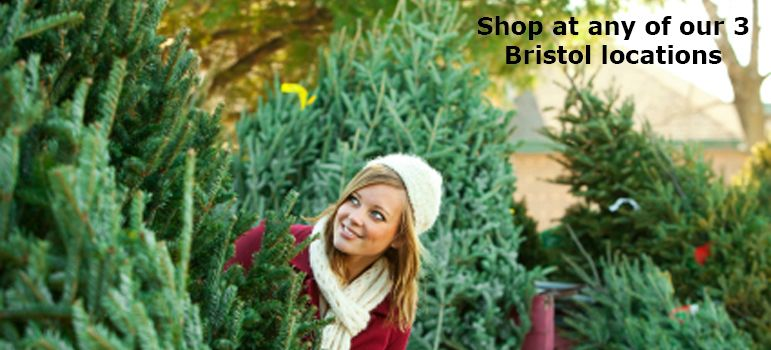 Bristol Christmas Trees Pick Your Own And Delivery